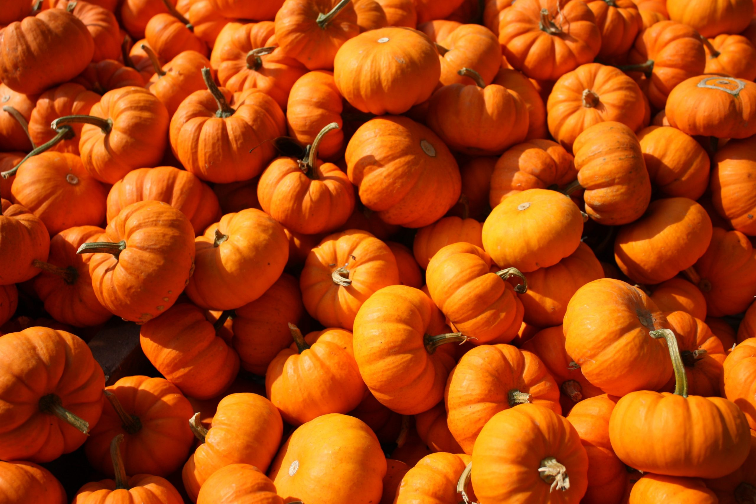 Kelowna Pumpkin Patches